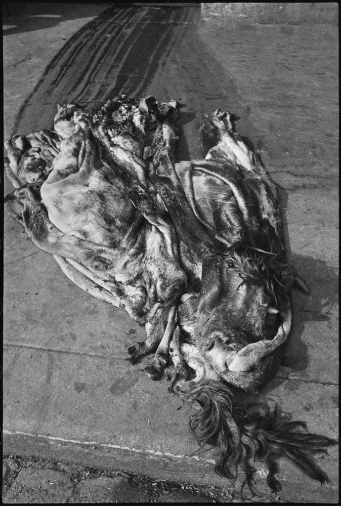 The Slaughterhouse of La Villette in the 19th arrondissement of Paris, 1932.