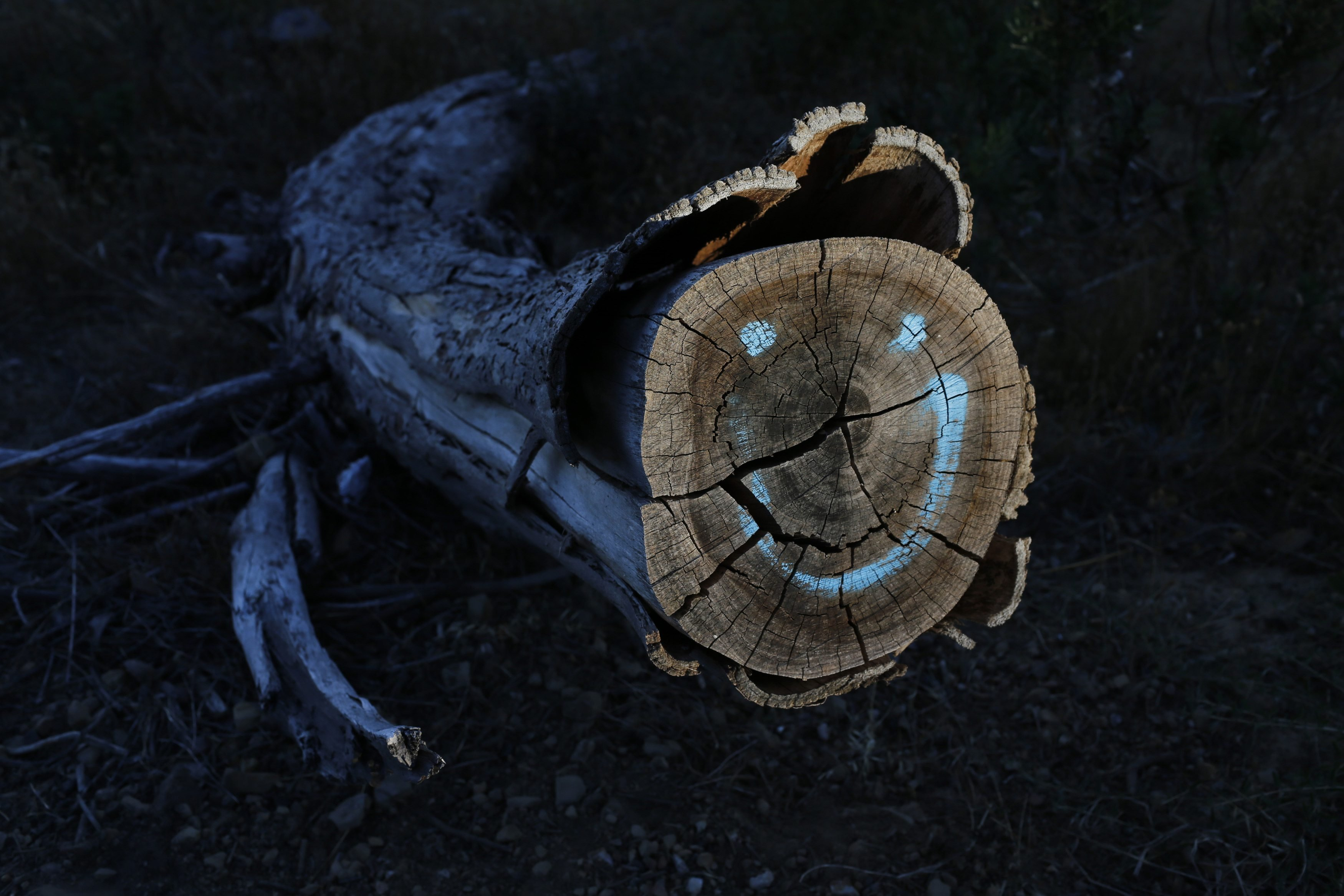 Graffiti marks the stump of a tree felled as part of a plan to remove alien vegetation and reduce fire risks in Cape Town's Table Mountain National Park, Jan. 27, 2014. The city's iconic backdrop is rich in floral biodiversity and forms part of the Cape Floral Kingdom World Heritage Site.