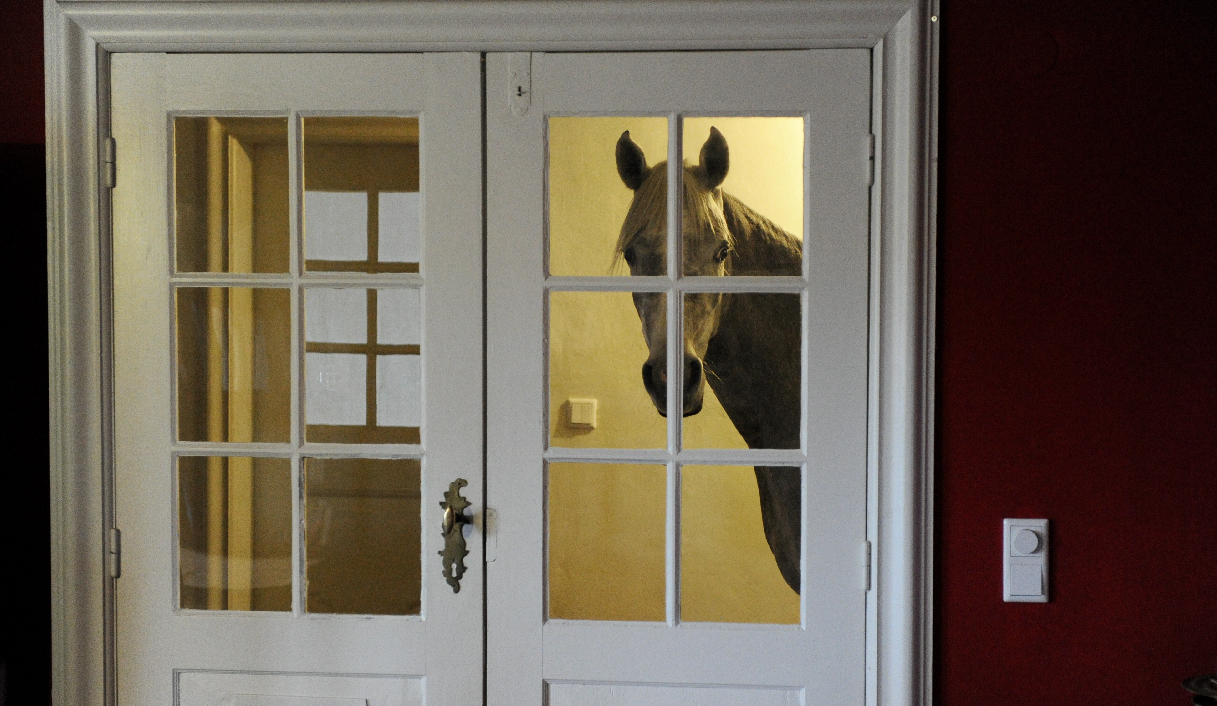 Three-year-old Arabian horse Nasar stands in front of the living room door, Feb. 10, 2014. After a powerful storm swept through northern Germany in December, Stephanie Arndt brought her horse Nasar inside. Since then, the horse has grown very comfortable and stays indoors.