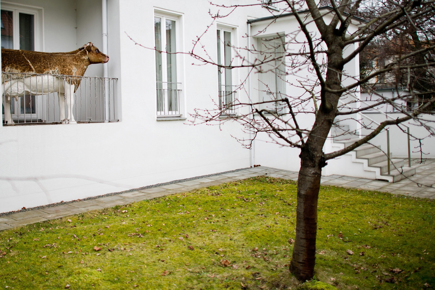 A statue of a cow stands on a balcony of a private home in Hanover, Germany, Feb. 18 2014. The piece of art was put on the balcony on purpose, because the inhabitants thought it would encumber the mowing of the lawn.