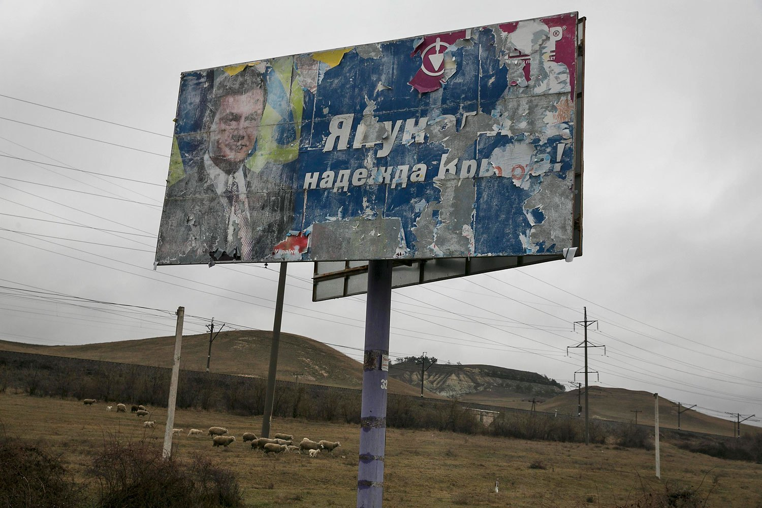 """Sheep graze next to an old election sign on a road from Simferopol to Sevastopol reads """"Yanukovych is the hope of Crimea"""", Feb. 27, 2014."""