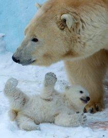 APTOPIX Russia Polar Bear Cub