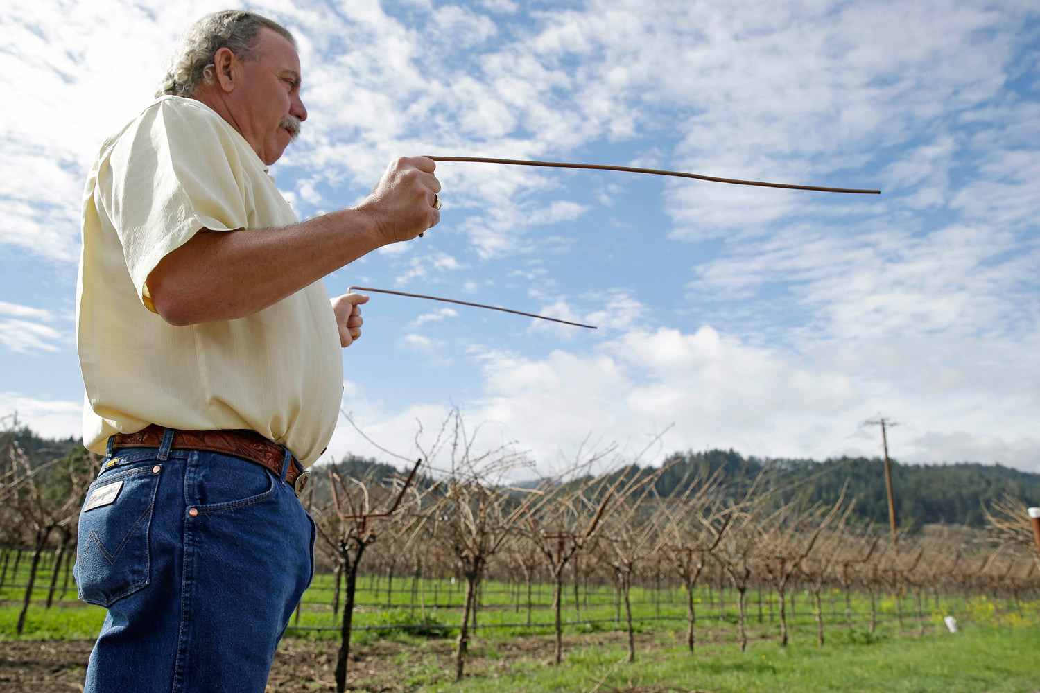 Proprietor Marc Mondavi demonstrates dowsing with  diving rods  to locate water at the Charles Krug winery in St. Helena, Calif.