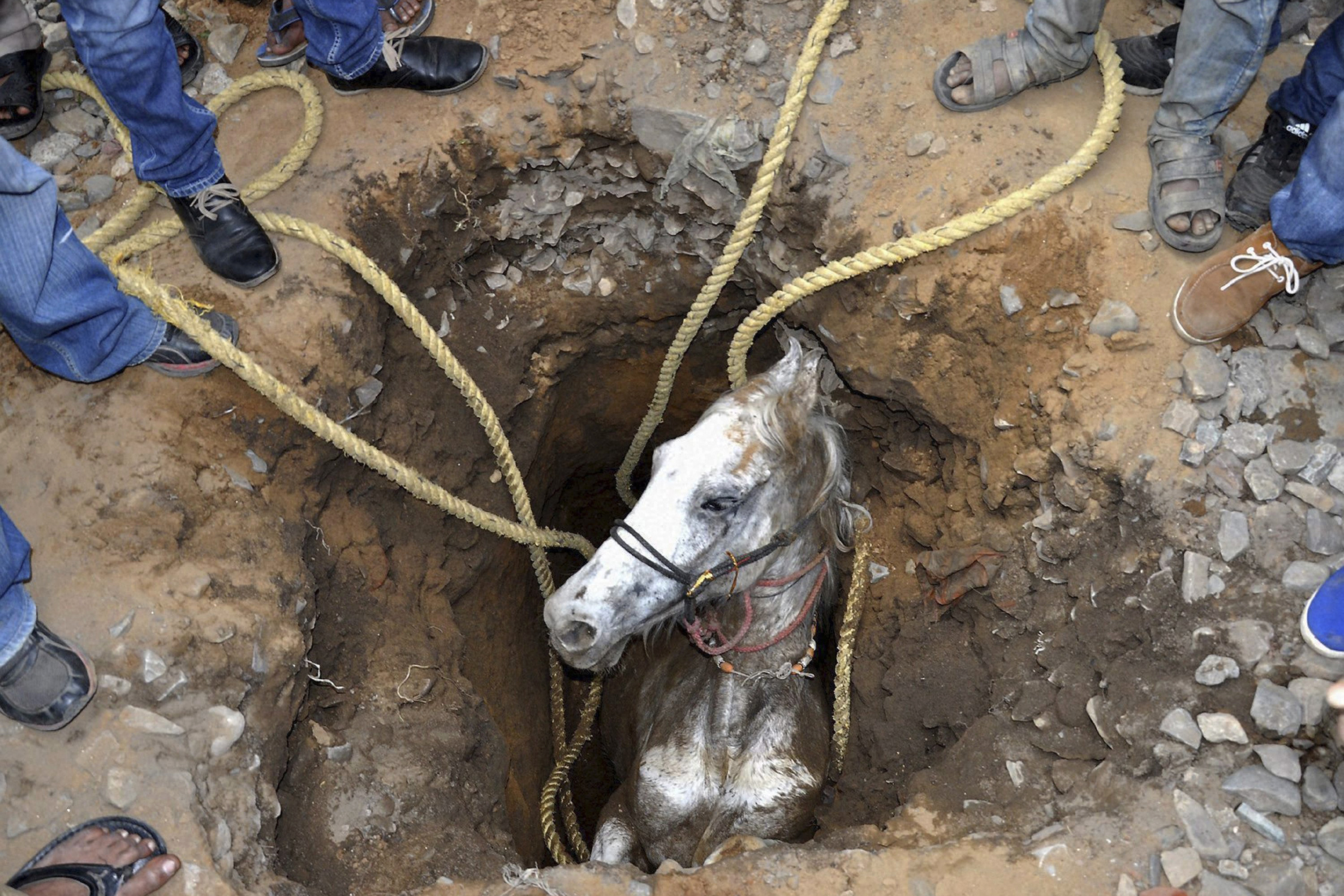 People stand around a pit to rescue a horse that fell in, in Jalandhar, in the northern Indian state of Punjab, March 5, 2014. The horse was rescued from the pit, dug to erect electric poles, after a two-hour rescue operation, according to local reports.