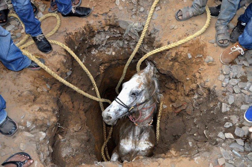 India Horse Rescue
