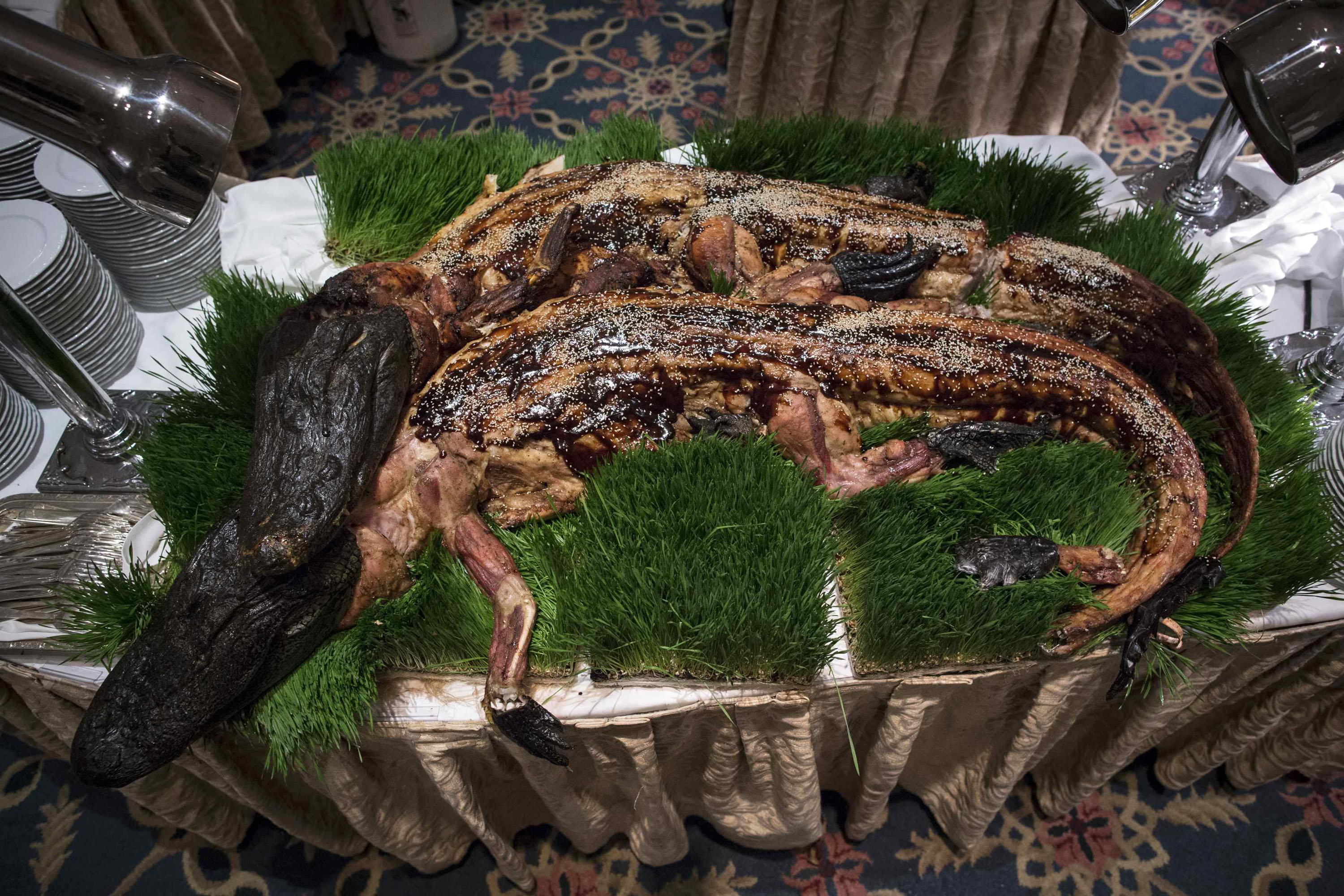 Whole cooked alligators are displayed before being served at the 110th Explorers Club Annual Dinner at the Waldorf Astoria in New York City March 15, 2014. The club promotes the scientific exploration of land, sea, air and space and featured catering by chef and exotic creator Gene Rurka.