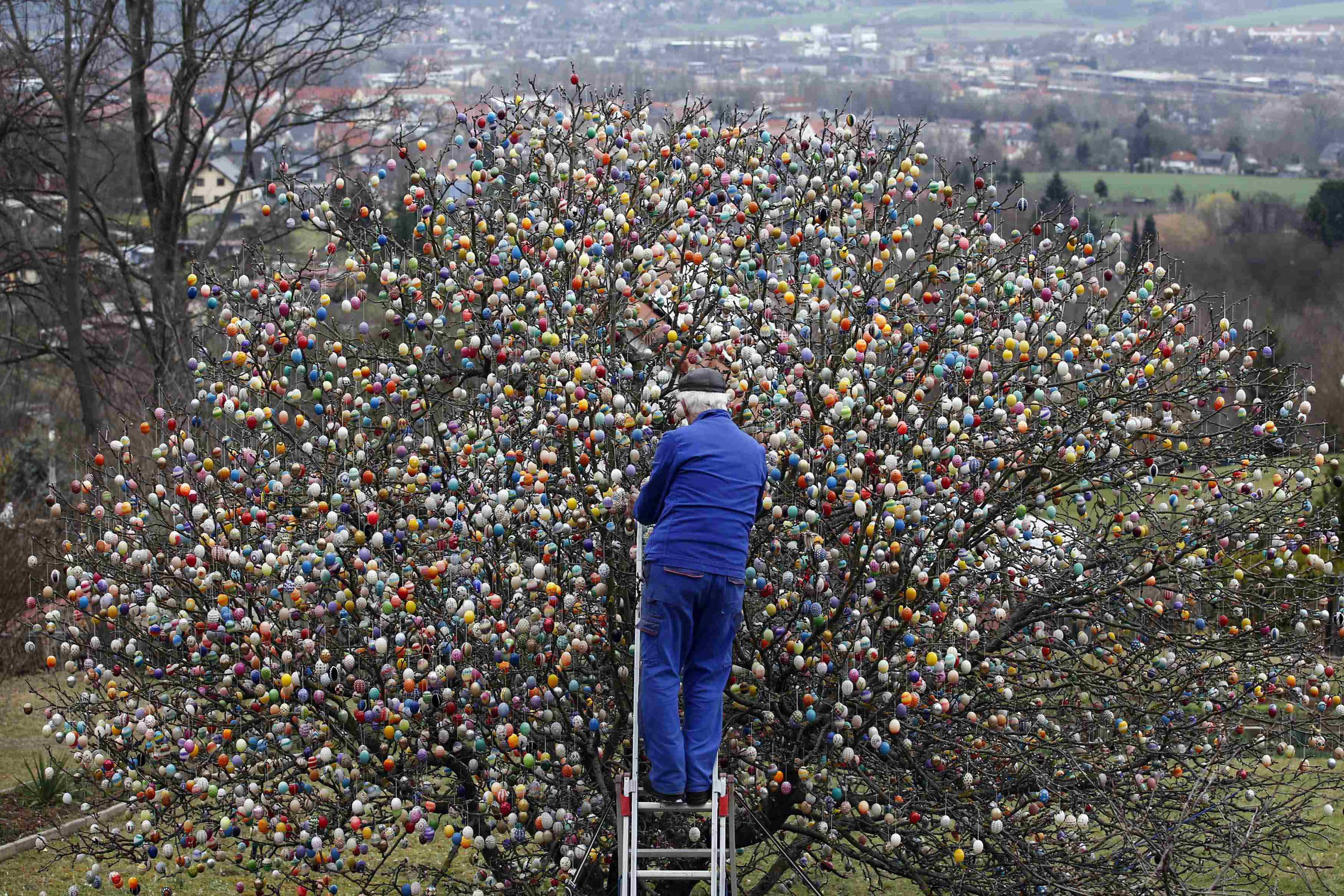 German pensioner Volker Kraft decorates an apple tree with Easter eggs in the garden of his summerhouse, in the eastern German town of Saalfeld, March 19, 2014.  Each year since 1965 Volker and his wife Christa spend up to two weeks decorating the tree with their collection of 10,000 colourful hand-painted Easter eggs.