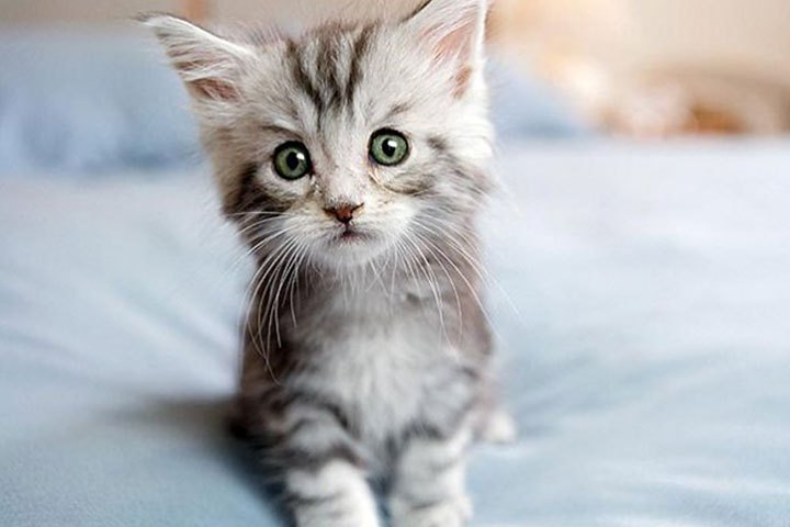 Too Cute                               The aptly named Too Cute follows litters of kittens, puppies and a host of other fuzzy animals from birth to adolescence. Need we say more?
