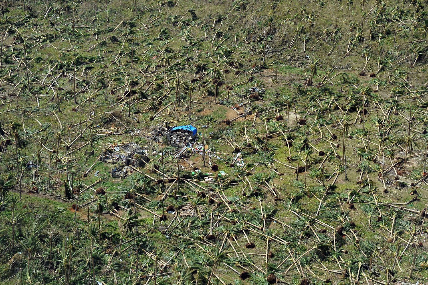 Aerial photo showing uprooted coconut trees on a hill near the town of Guiuan in Eastern Samar province in the central Philippines on November 11, 2013 only days after Super Typhoon Haiyan devastated the town on November 8.