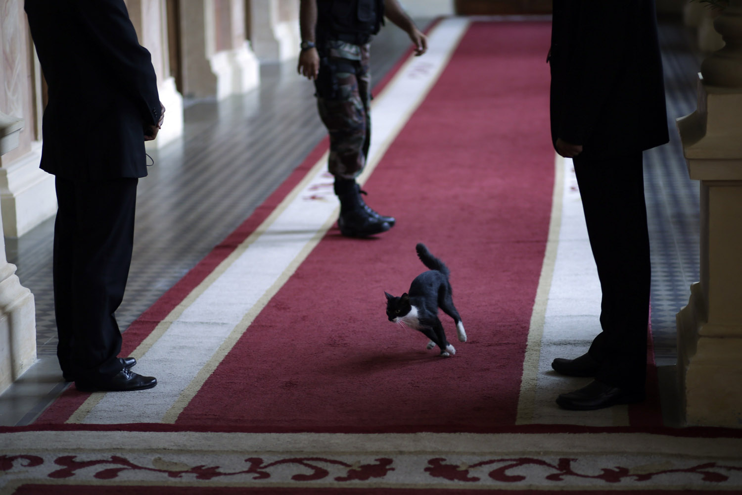 Mar. 20, 2014. Resident cat, El dueo de casa, tears through a Government Palace corridor as officials await the arrival of U.S. Assistant Secretary of State of the Bureau of Western Hemisphere Affairs Roberta S. Jacobson, for her official meeting with Paraguayan President Horacio Cartes, in Asuncion, Paraguay,