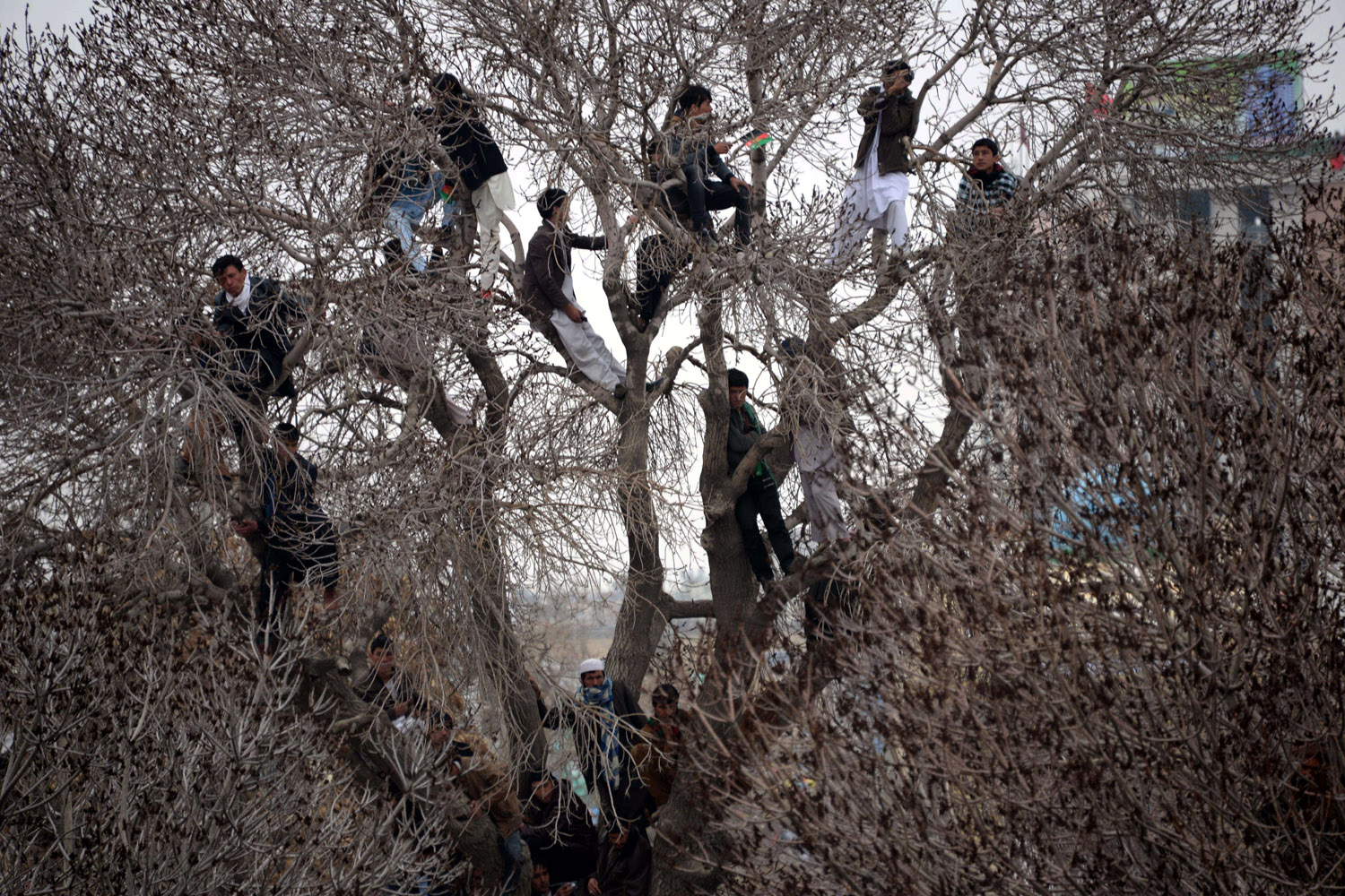Mar. 21, 2014.                                Afghan men look on from tree branches while other revelers gather near the Hazrat-e-Ali shrine for Nowruz festivities which marks the Afghan new year in Mazari-i-Sharif.