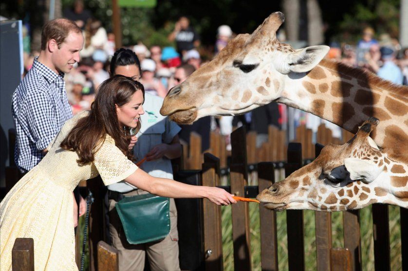 Prince William and Catherine, Duchess of Cambridge, feed giraffes at Sydney's Taronga Zoo