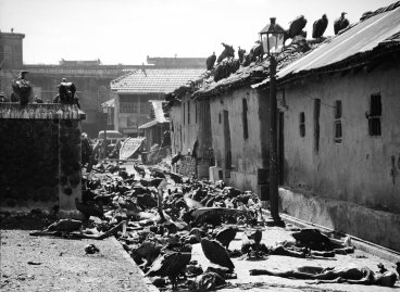 """Carrion birds feast on victims of bloody religious riot in India."" (Calcutta, 1946)"