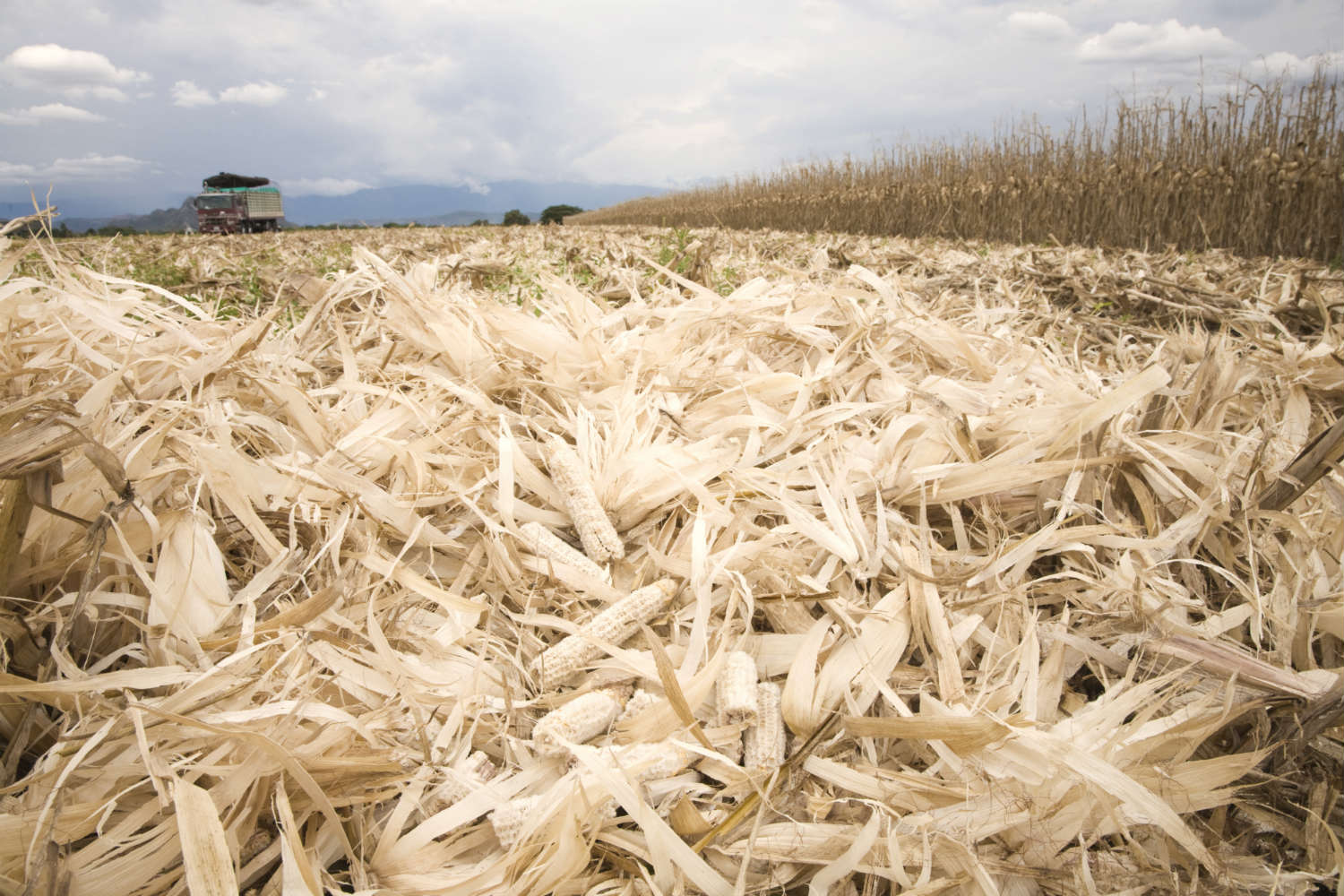 New research shows that next-generation biofuels made from corn waste aren't so green