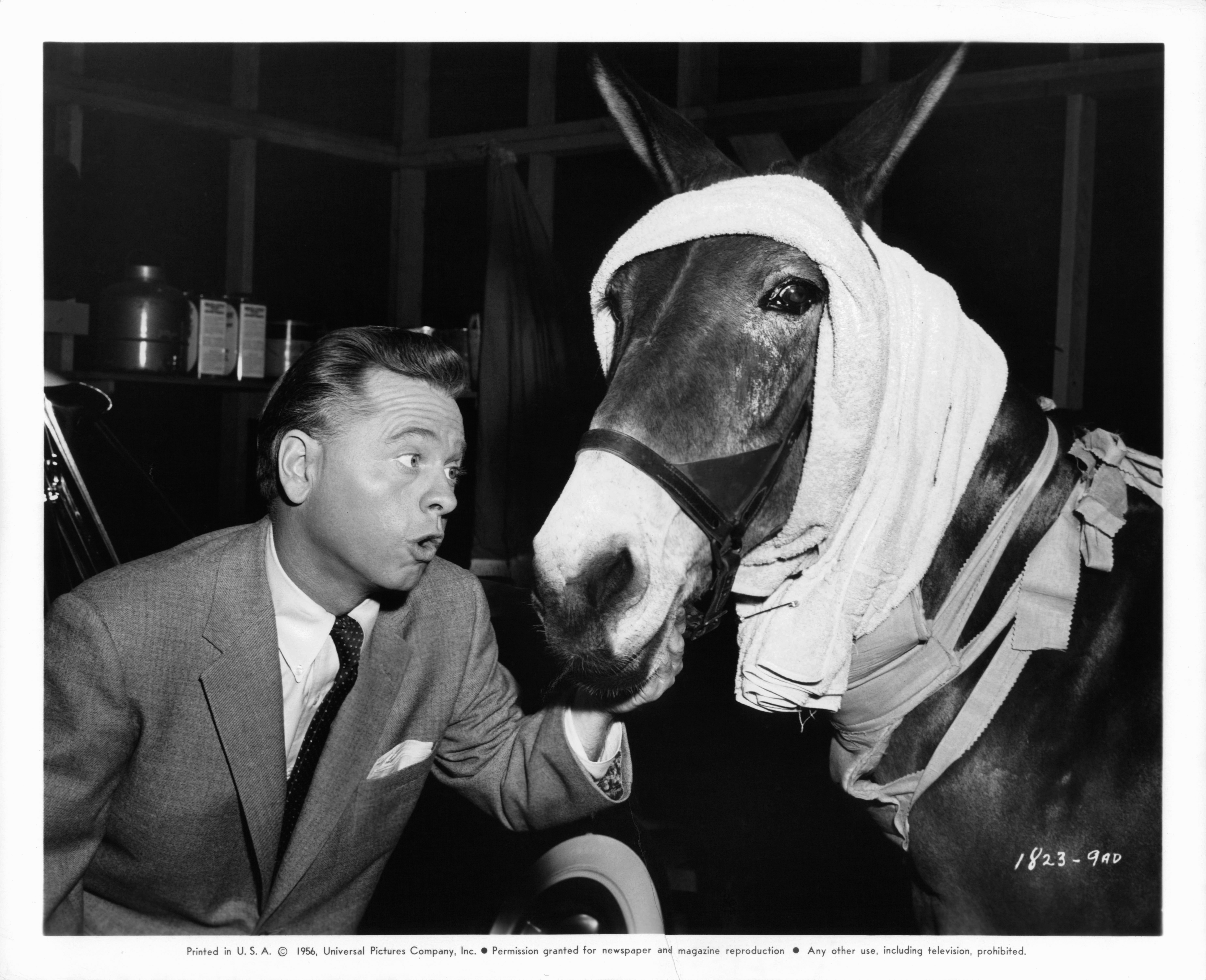 Mickey Rooney pets leading mule in a publicity portrait for the film <i>Francis In The Haunted House</i> in 1956.