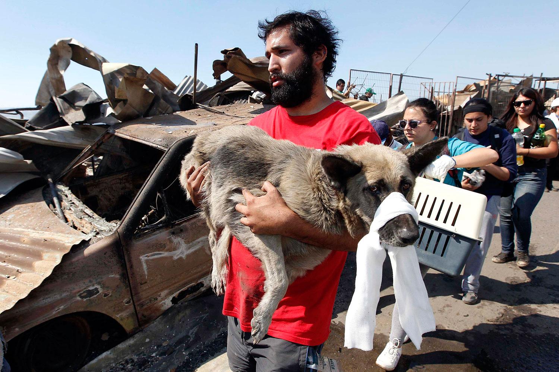 A resident carries an injured dog, April 13, 2014.