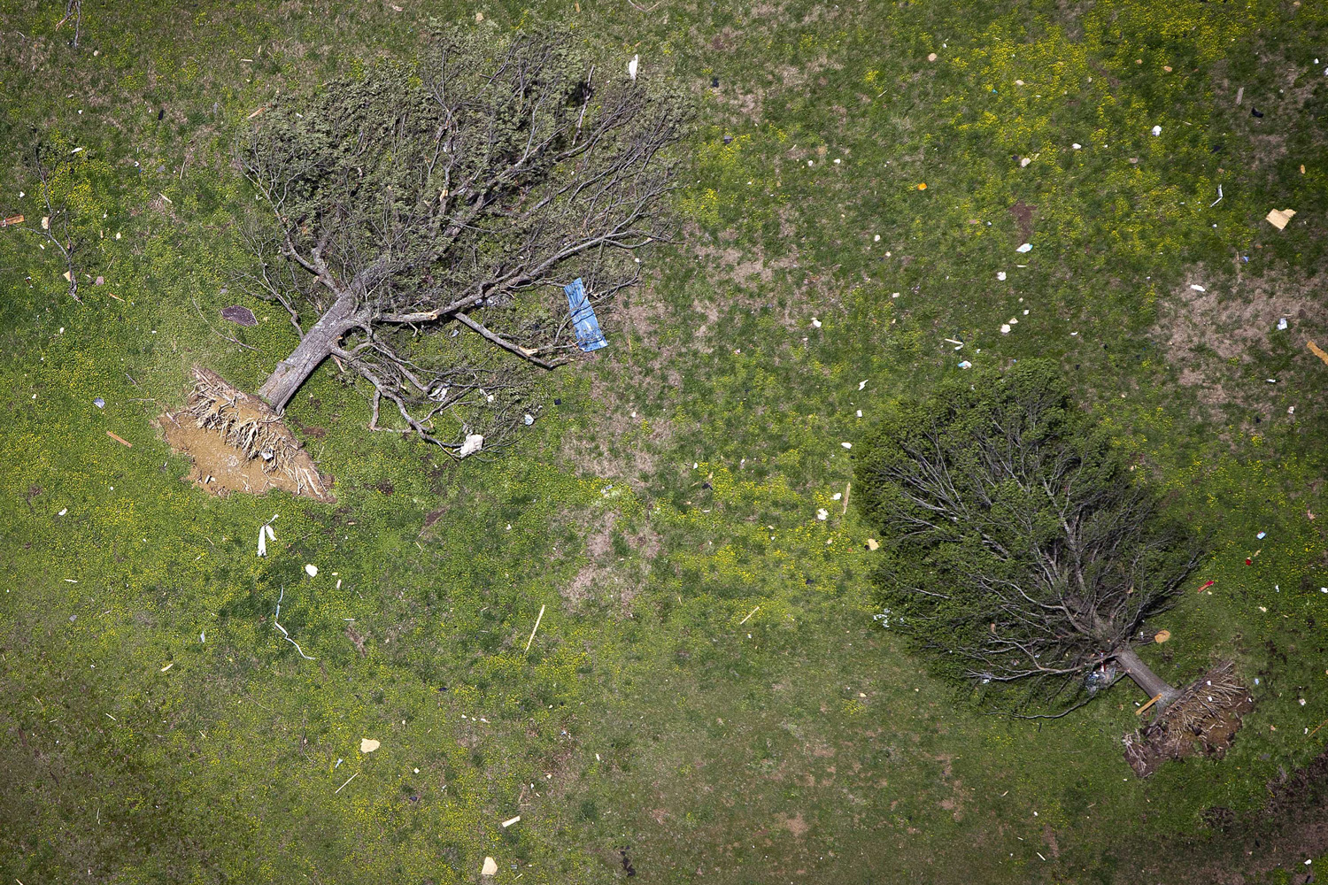 Apr. 28, 2014. Uprooted trees are pictured after a tornado hit Vilonia, Arkansas.