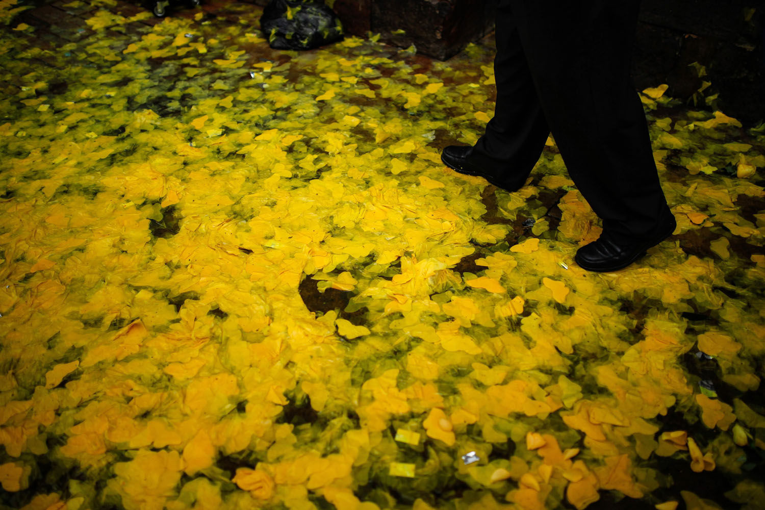 Apr. 22, 2014. A man walks over paper cut-outs of butterflies in front of the Primary Cathedral during the homage of the late Latin American writer Gabriel Garcia Marquez in Bogota, Colombia.