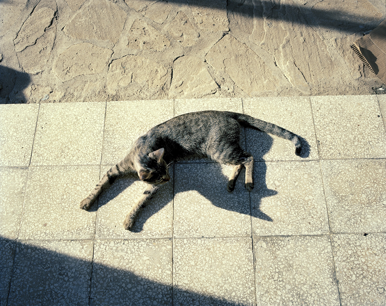 A cat sunbathing in a house in Justiz, a small town in the outskirts of Havana city.