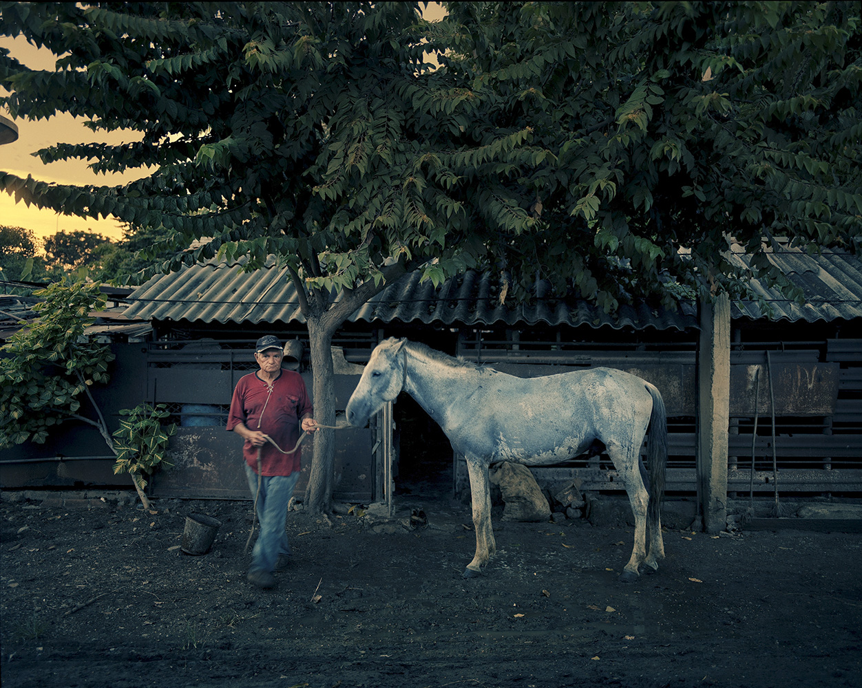 Carlos bathes his horse after a day's work in the town of Manati.