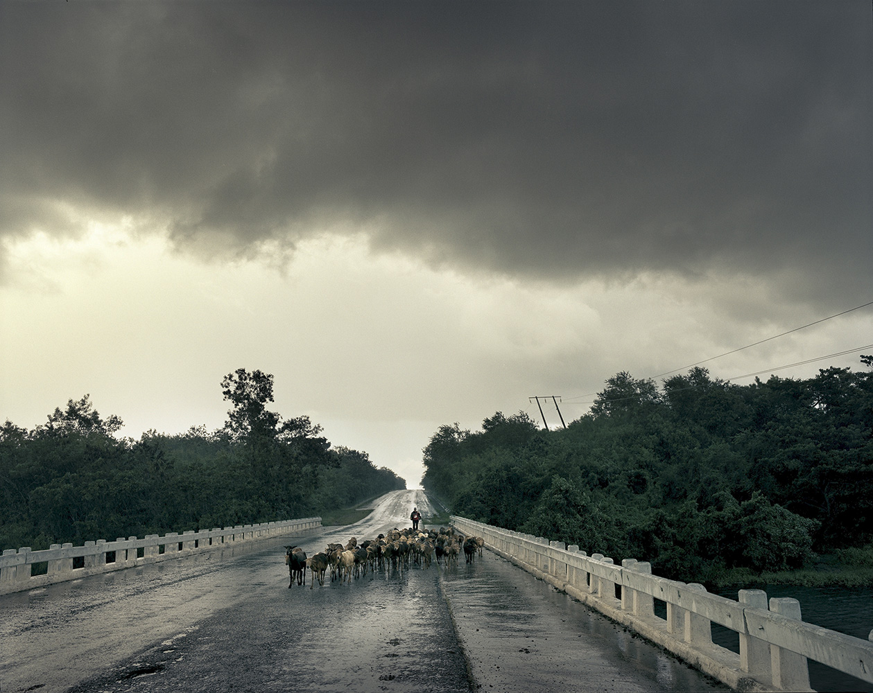 A woman leads a herd of lambs over bridge and looks for shelter in Santiago de Cuba Province.
