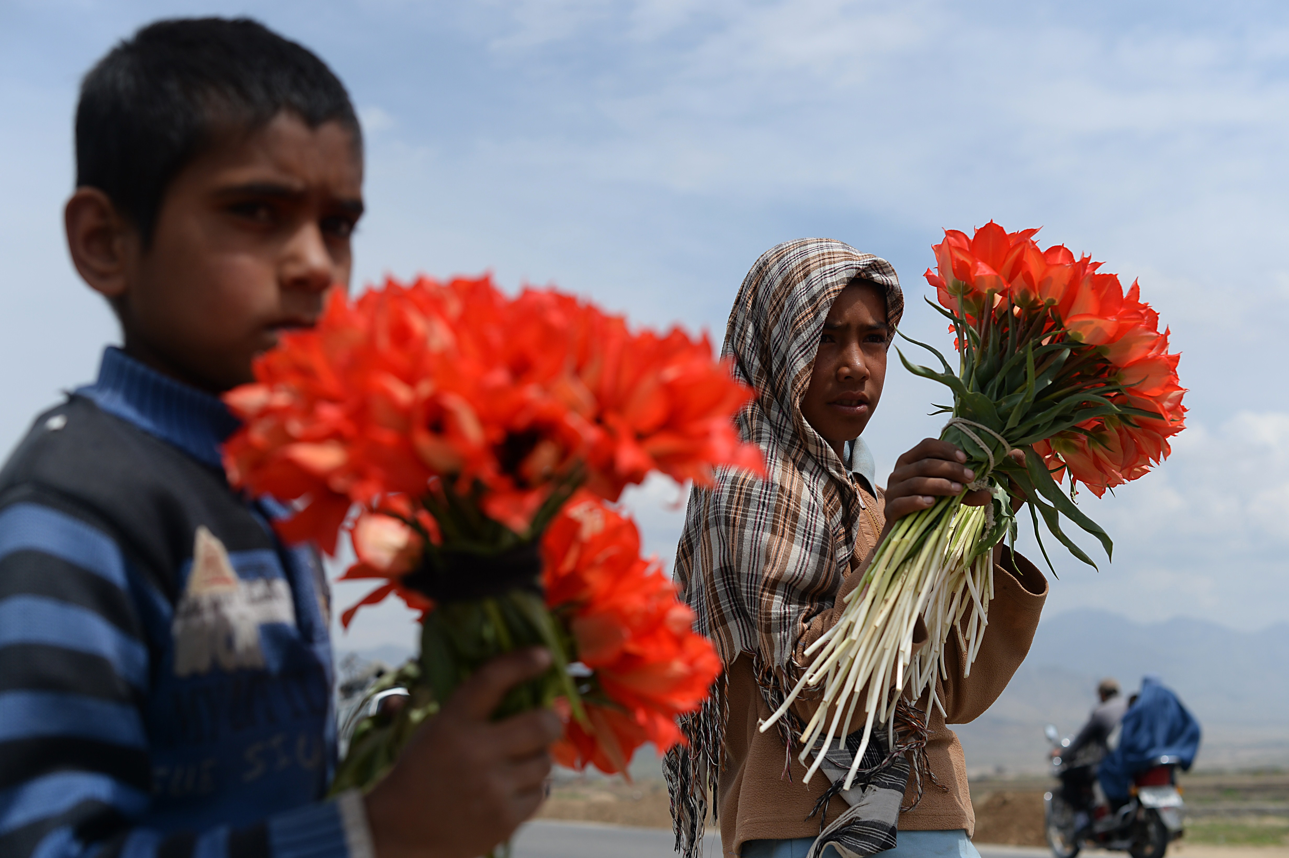 Afghan children Malik, 8, and Popal, 11, wait at a roadside with wild tulips for sale to potential customers driving through the Shamali plains, north of Kabul.