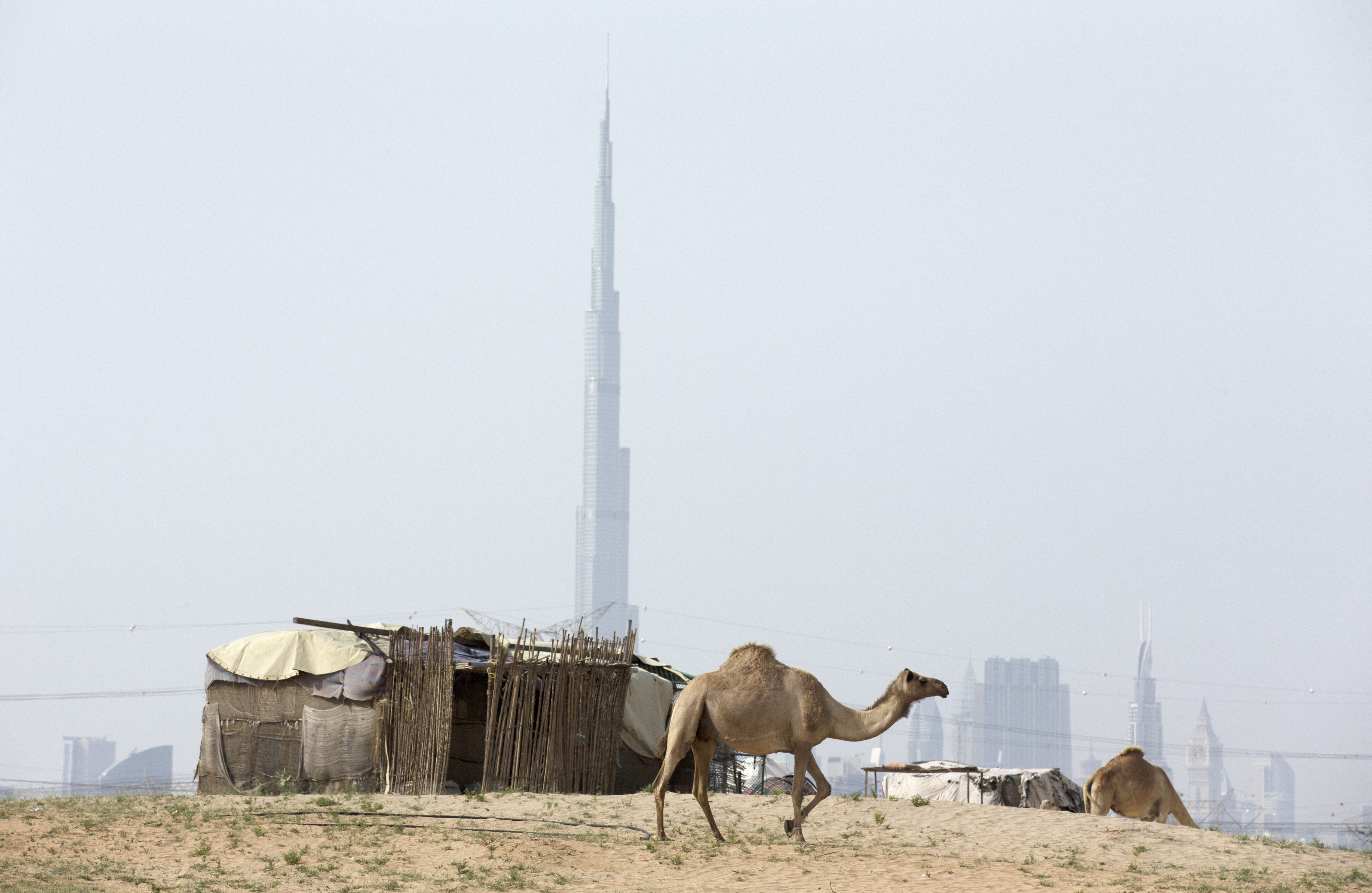 DUBAI, UNITED ARAB EMIRATES - APRIL 17:  A basic dwelling of a camel handler is pictured with the Burj Khalifa in the back ground as a camel walks past on April 17, 2014 in Dubai, United Arab Emirates.  (Photo by Warren Little/Getty Images)