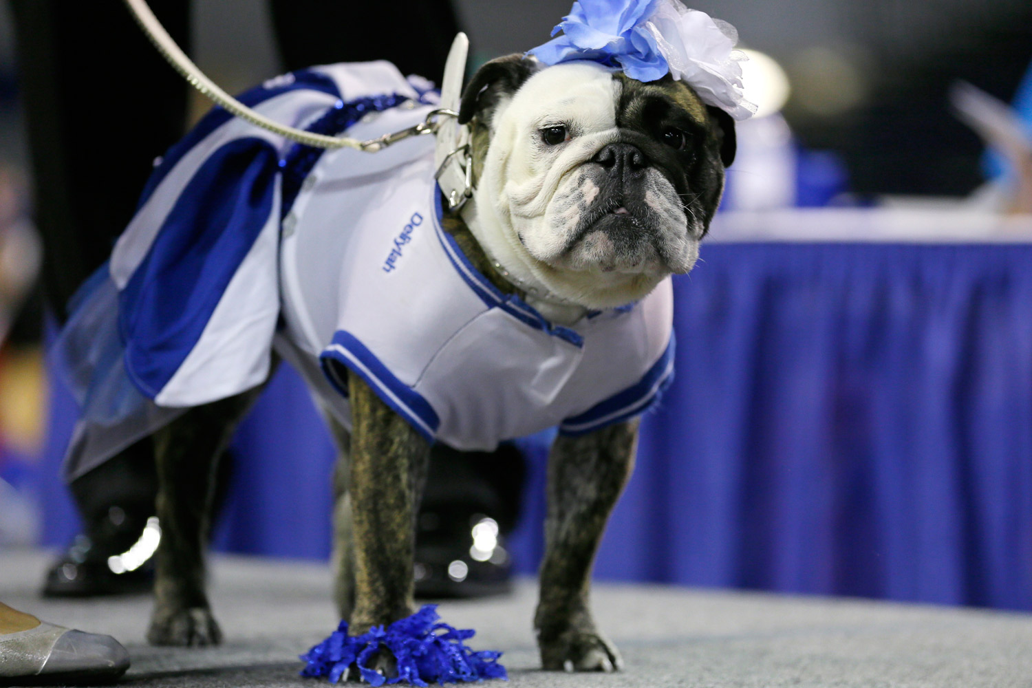 Owned by Tressa Yeggy of Des Moines, Deliylah stands after winning the best dressed dog award.