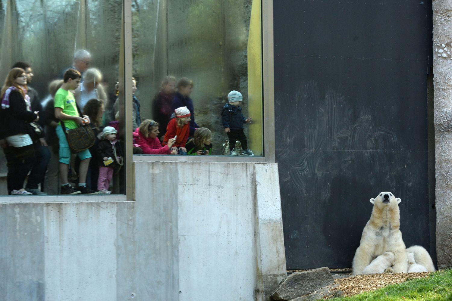 Apr. 7, 2014. Visitors watch the16-weeks-old polar bear twins Nobby and Nola cuddle with their mother Giovanna in their enclosure in the zoo in Munich Hellabrunn, southern Germany.