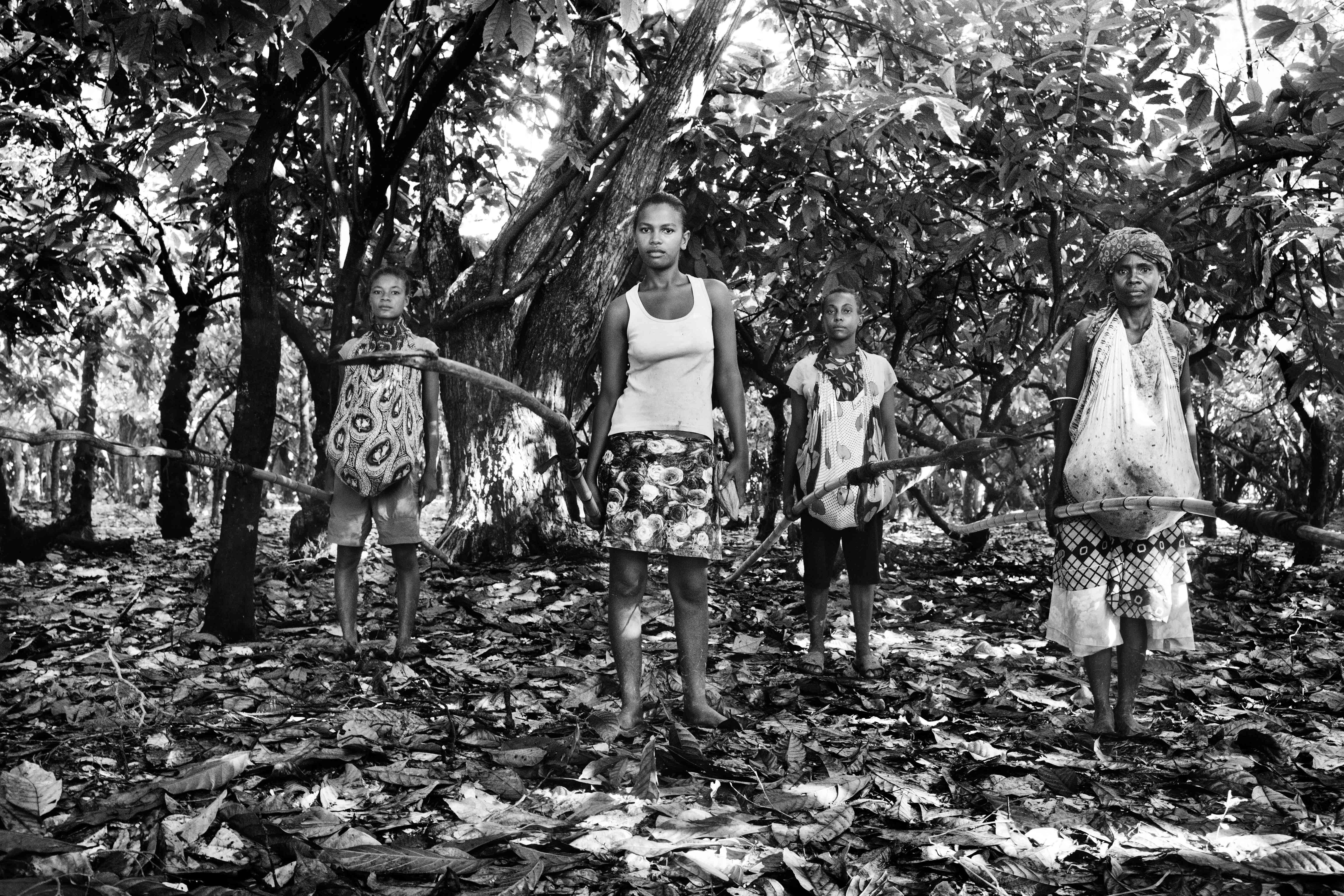 Workers at a large cocoa plantation in Ambanja. March 2013.