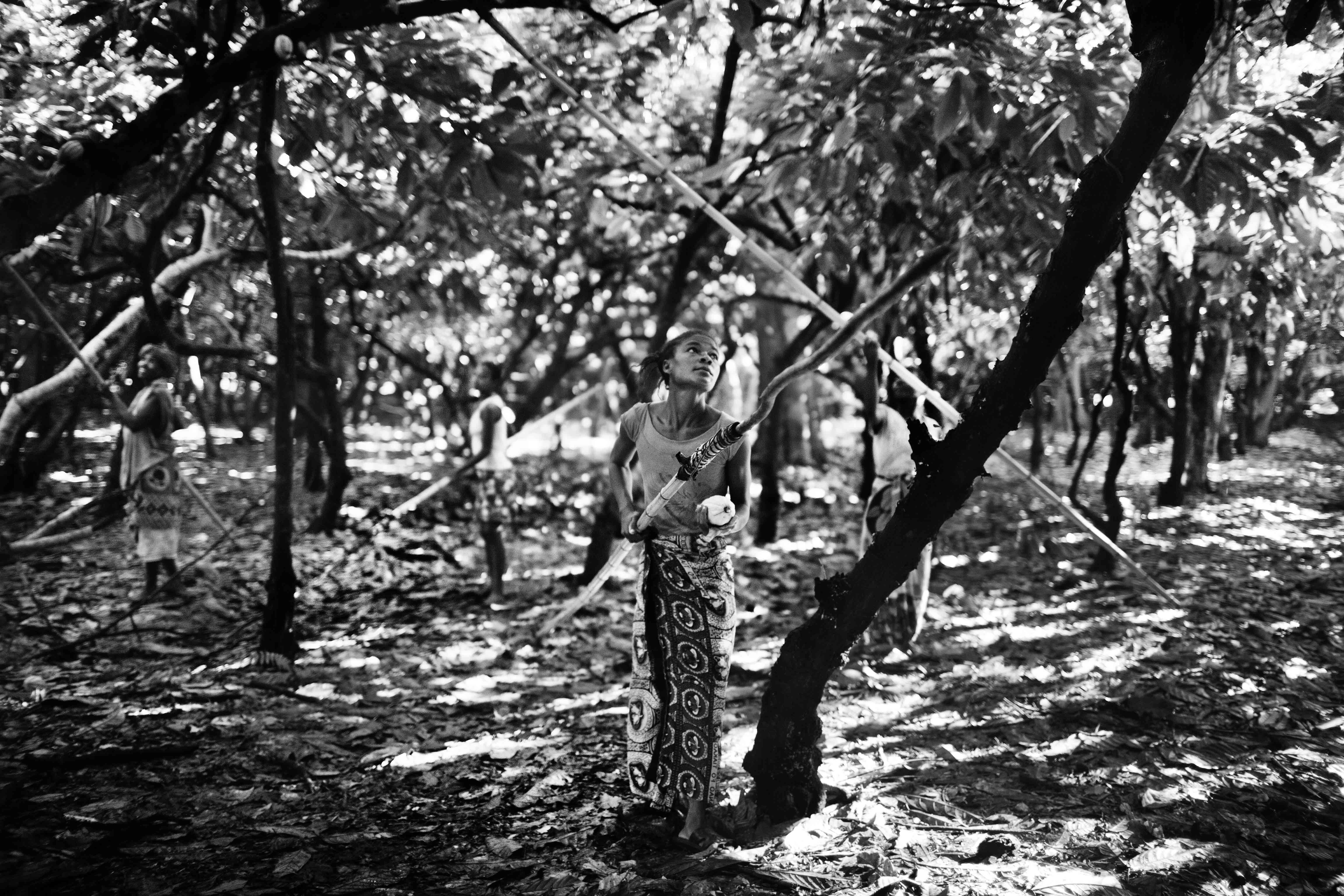 A worker at a large cocoa plantation in Ambanja. March 2013.