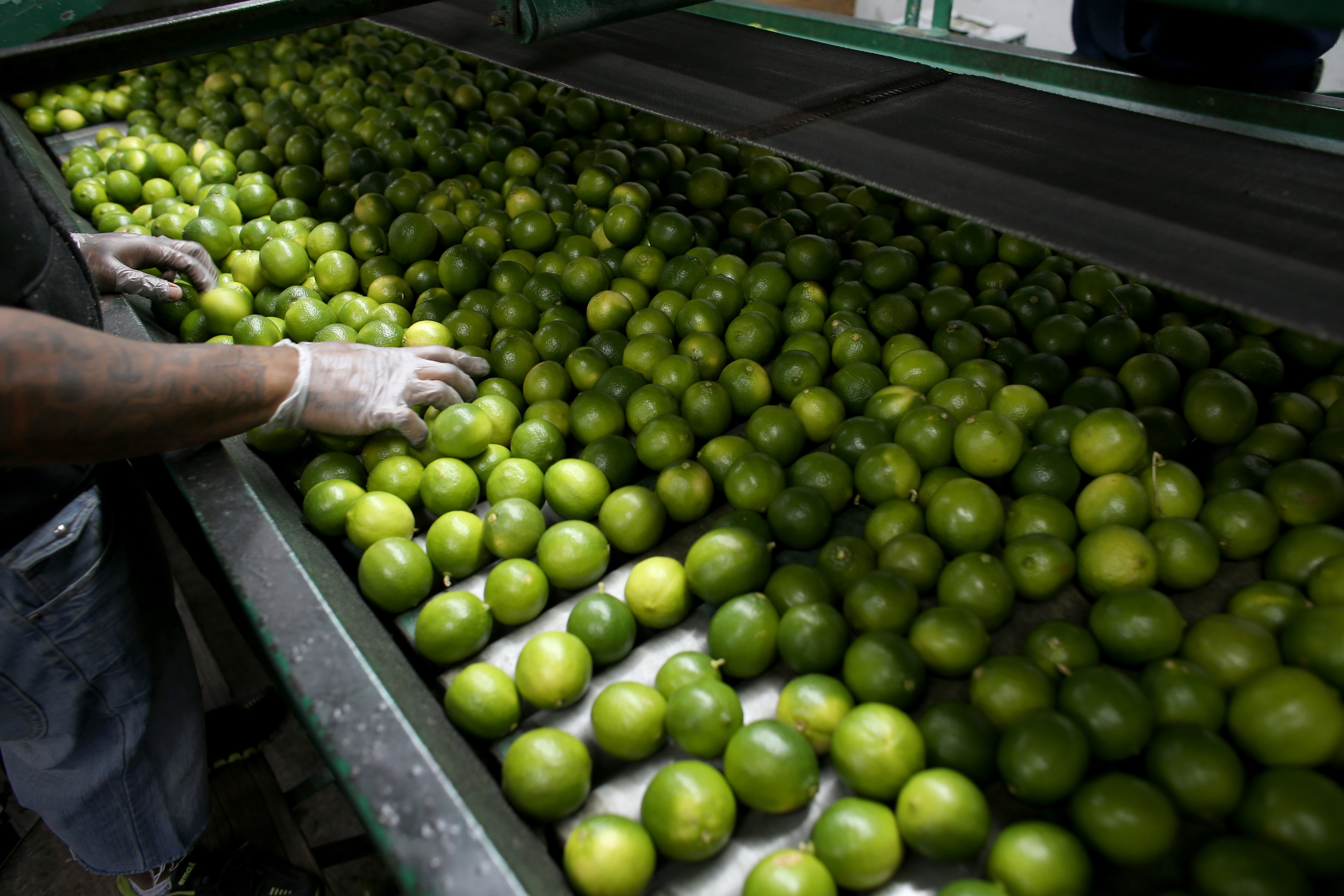 Dairoby Aldana sorts limes that have been imported from Columbia at SA Mex produce on March 26, 2014 in Miami.