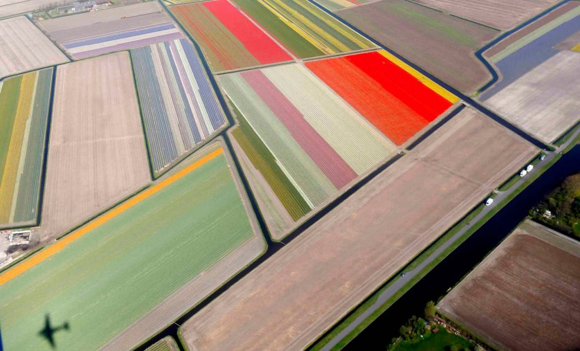 Aerial view of flower fields near the Keukenhof park, also known as the Garden of Europe, in Lisse, Netherlands, on April 9, 2014.