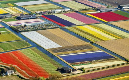 An aerial view of tulips in Lisse, Netherlands on April 9, 2014.