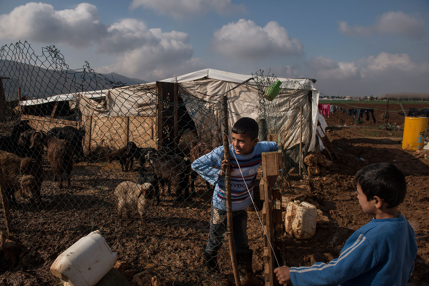 Syrian refugee, Khalid, 11, from Homs, tends to the family's goats at a tented settlement in Turbide in the Bekaa Valley, Lebanon.