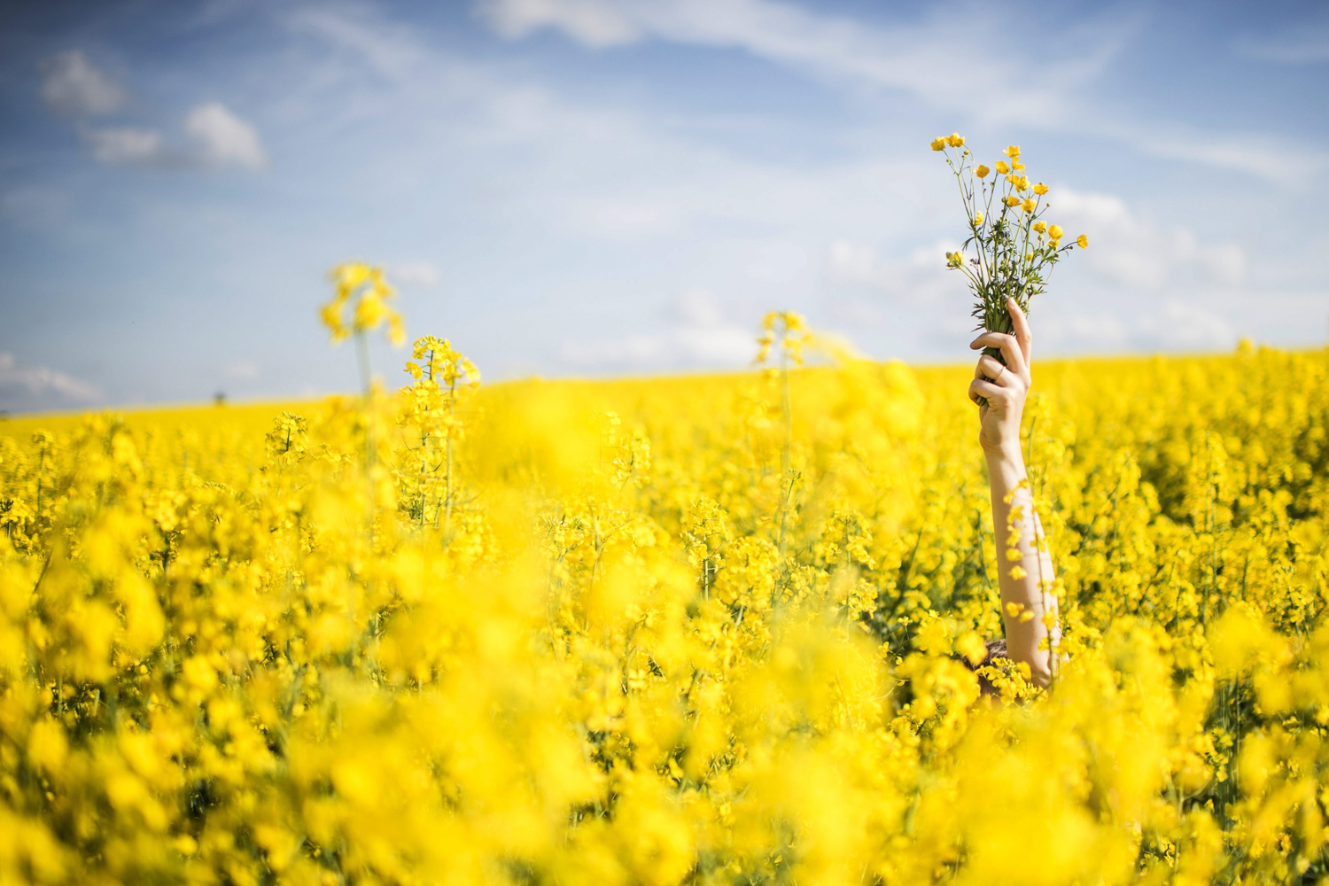 A woman raises a bunch of flowers picked in a colza field  in Diessenhofen, Switzerland, on April 26, 2014.
