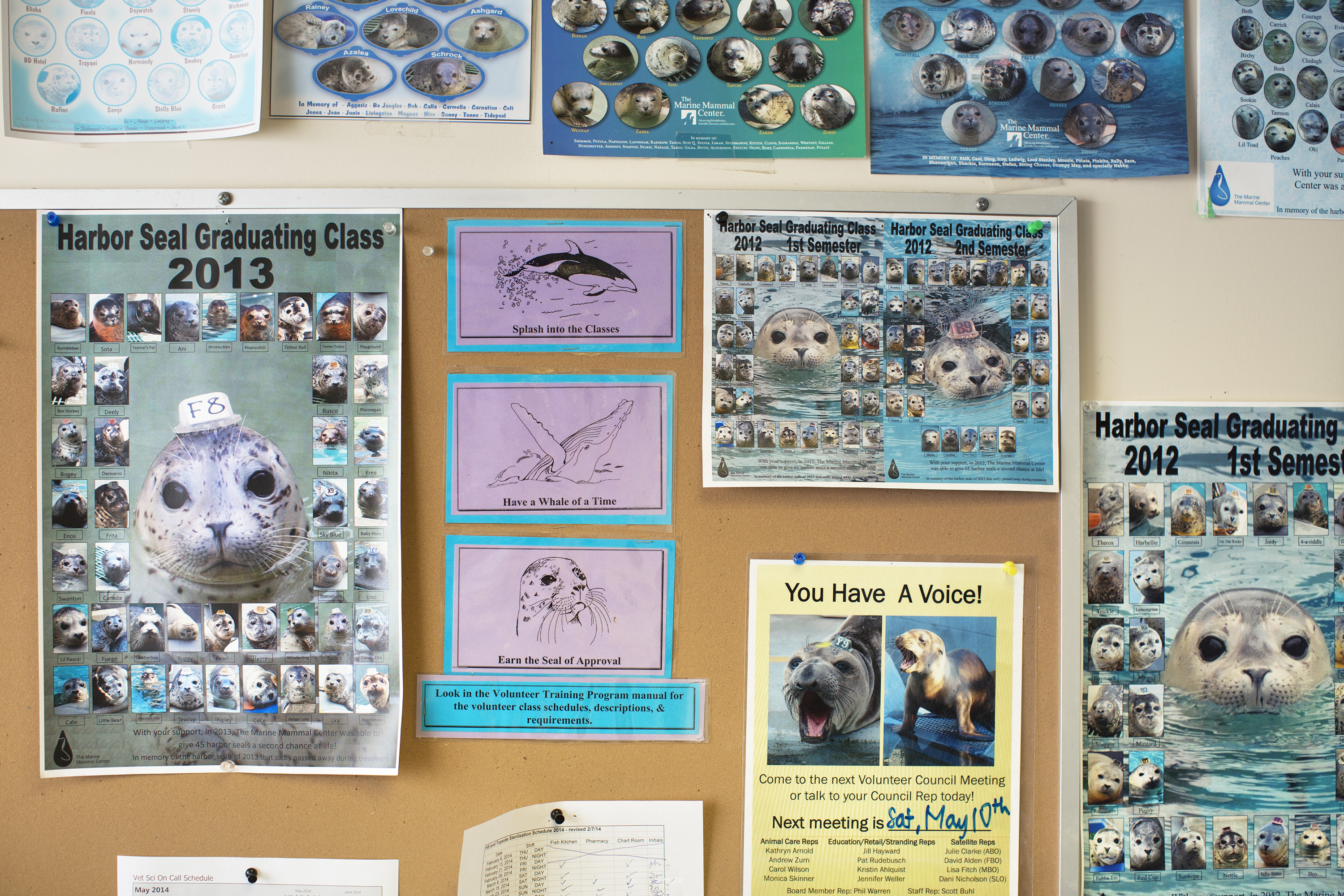 Seals and sea lions released back into their natural habitat are added to annual graduation posters at  the Marine Mammal Center in Marin County, Calif., May 9, 2014.