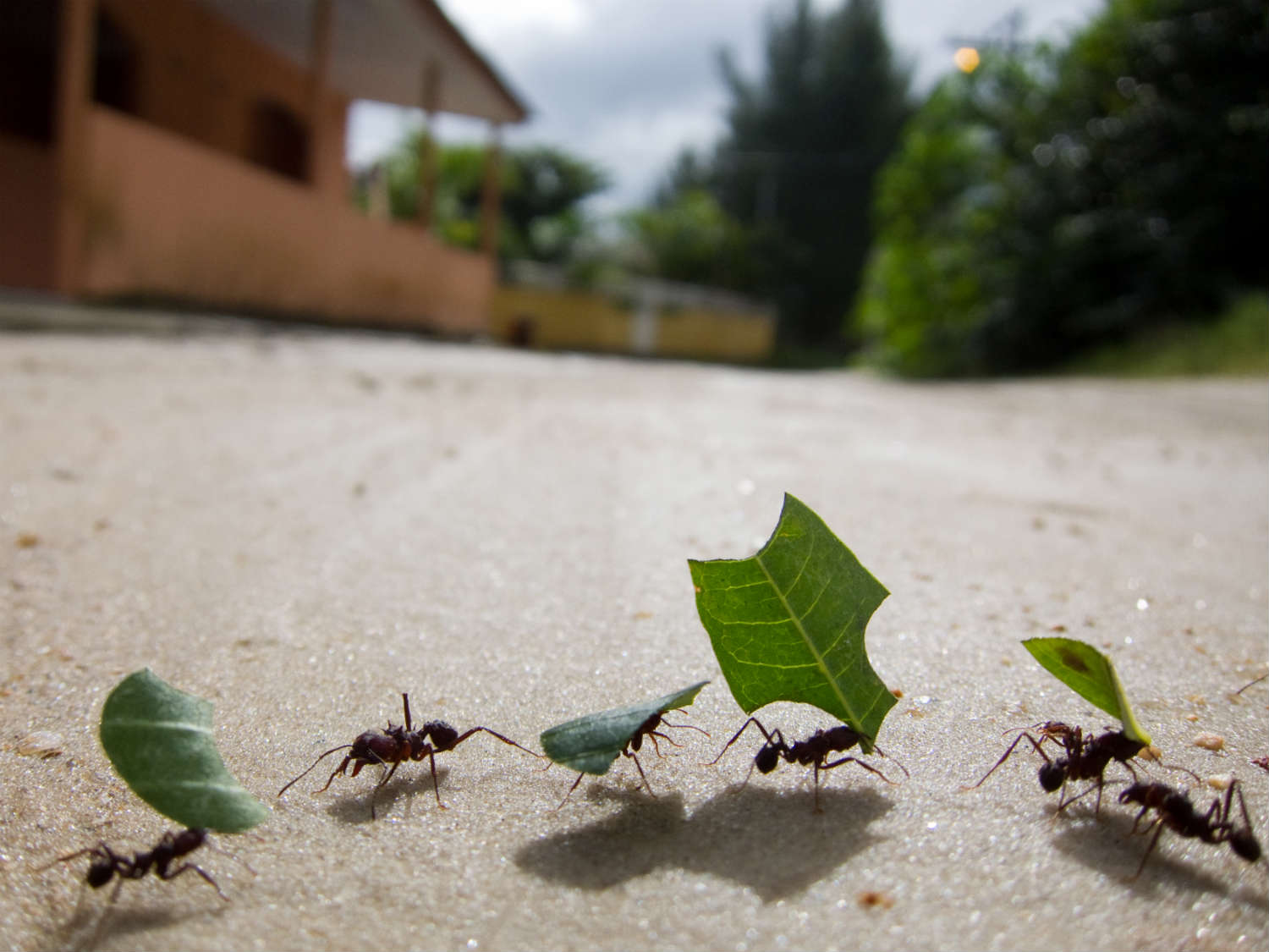As a collective, ants are efficient and surprisingly intelligent