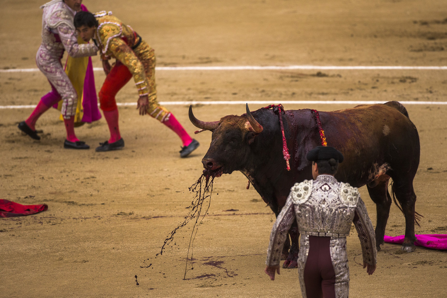 May 20, 2014. Spanish bullfighter Jimenez Fortes, top second left, kills a Los Chospes ranch fighting bull after being tossed by the bull during a bullfight at Las Ventas bullring in Madrid, Spain.