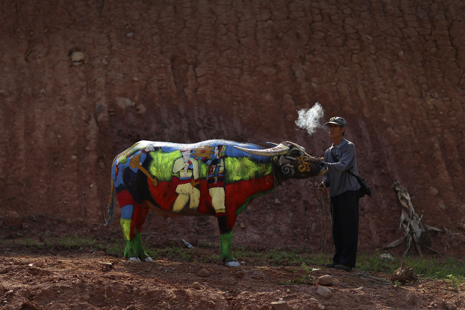 A man smokes as he waits with his painted buffalo before a buffalo body painting competition in Jiangcheng county, Yunnan province, May 18, 2014.