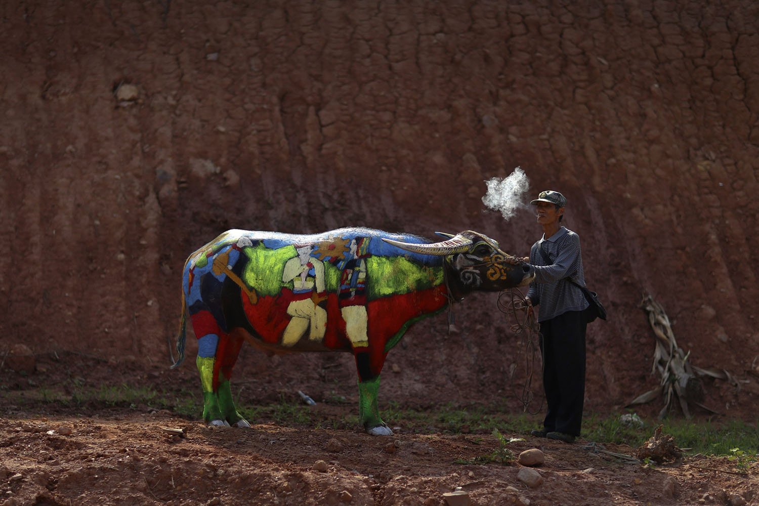 A man smokes as he waits with his painted buffalo before a buffalo bodypainting competition in Jiangcheng county, Yunnan province, China on May 18, 2014.