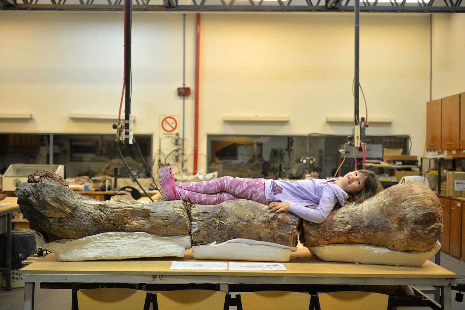 A girl, Marlene, lies on top of the original fossilized femur of a dinosaur displayed on exhibition at the Egidio Feruglio Museum in Argentina's Patagonian city of Trelew, on May 18, 2014.