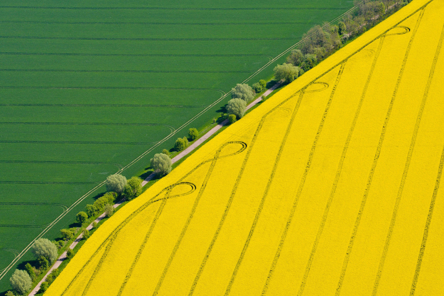 April 29, 2014. A View from a small aircraft onto a yellow rape field and a green corn field in the German state of Brandenburg near Muencheberg, Germany,