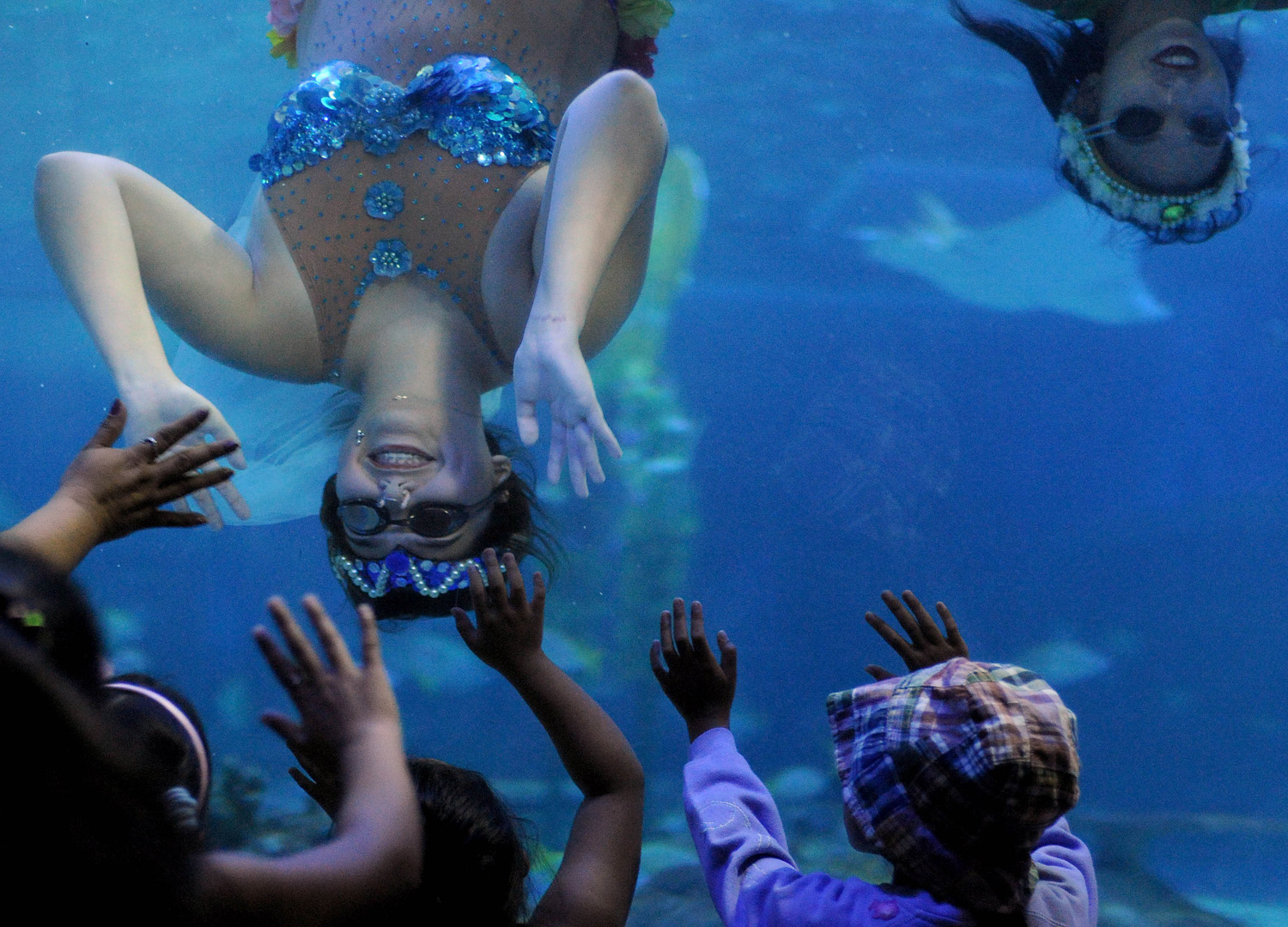 Divers in mermaid costumes perform during the Flores de Mayo or 'Flowers of May' festival at the Ocean Park Oceanarium in Manila on May 23, 2014.