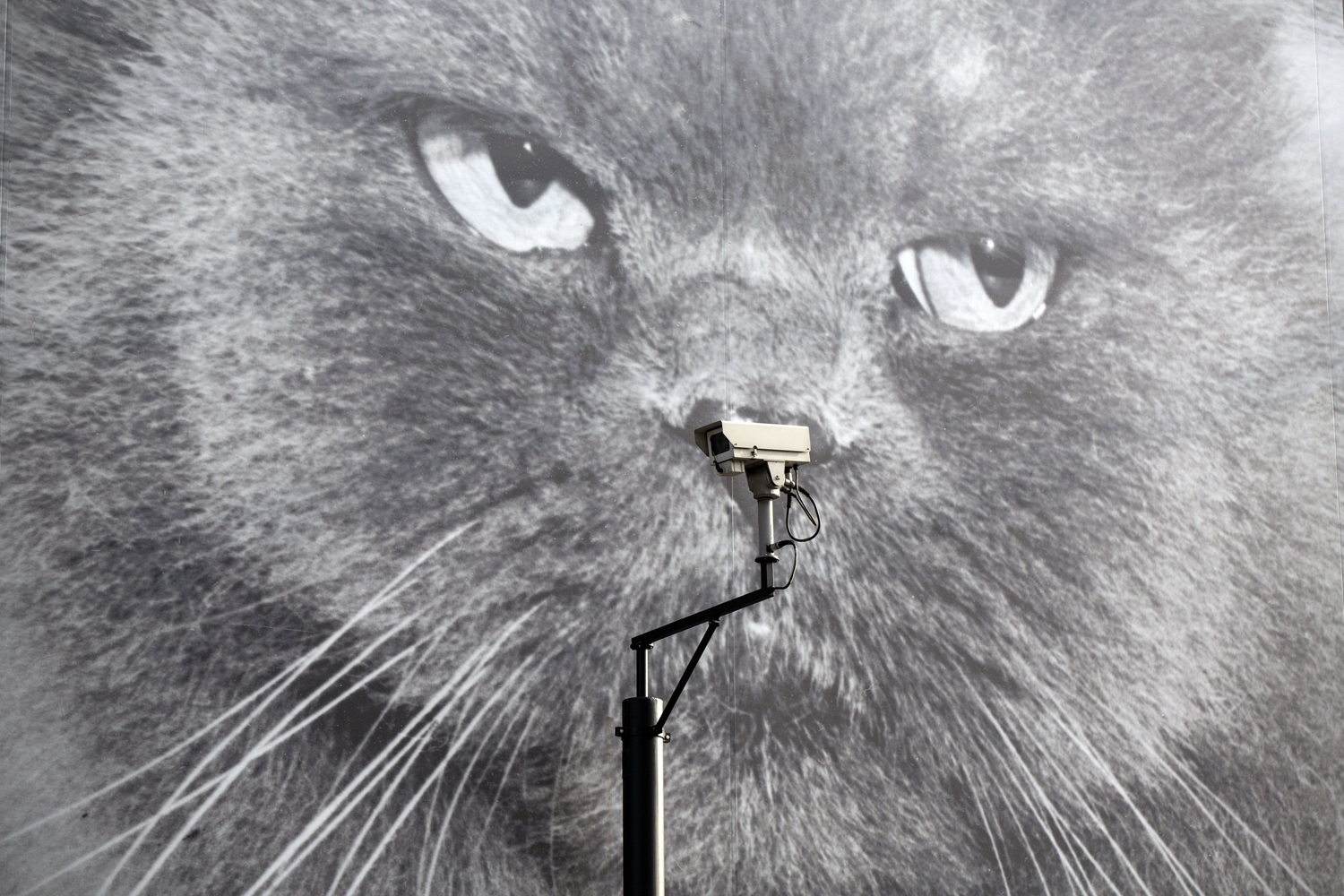 Apr. 30, 2014.  A CCTV camera is positioned in front of a giant poster of a cat  in London, England.