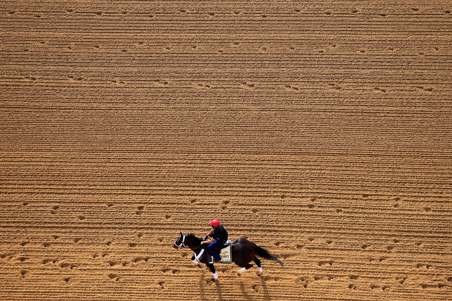 May 13, 2014. Exercise rider Bryan Beccia walks Ride On Curlin over the track in preparation for the 139th Preakness Stakes at Pimlico Race Course in Baltimore, Maryland.