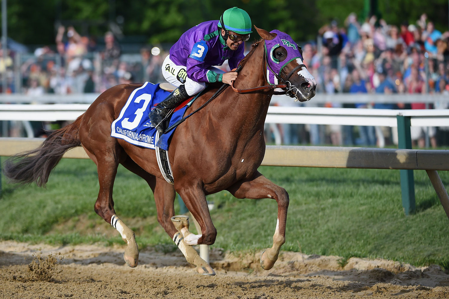 California Chrome #3, ridden by Victor Espinoza, head to the finish line enroute to winning the 139th running of the Preakness Stakes at Pimlico Race Course on May 17, 2014 in Baltimore.