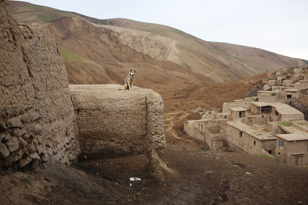 A dog sits on a roof above where the mud from the two landslides came to rest in the valley below, May 4, 2014.
