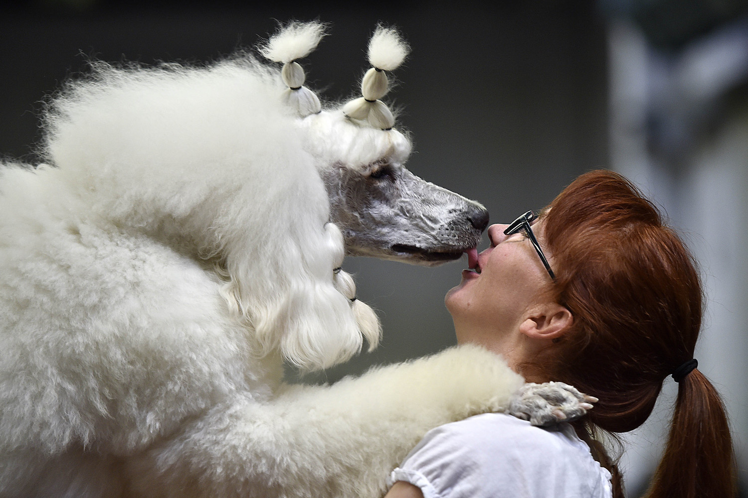Poodle Farinelli gives back a kiss to its owner Anja Trinks before the contest at the dog show in Dortmund, Germany, on May 9, 2014.
