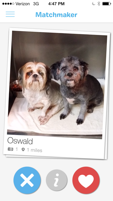 doggy dating app